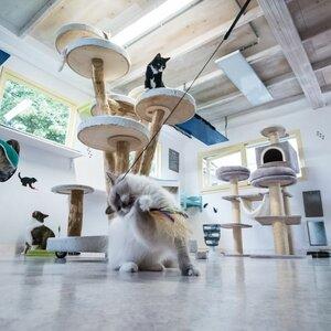 Kattenpension Silvestris image 2