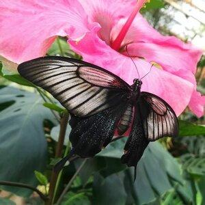 Vlindertuin Vlindorado image 2