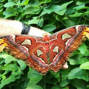 Vlindertuin Vlindorado image 3