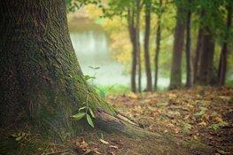 """Bomen planten voor overleden kinderen: """"Het voelt als een nieuw leven"""""""