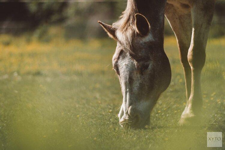 Paardencross juni 2019 weer terug in Dijkgatsbos