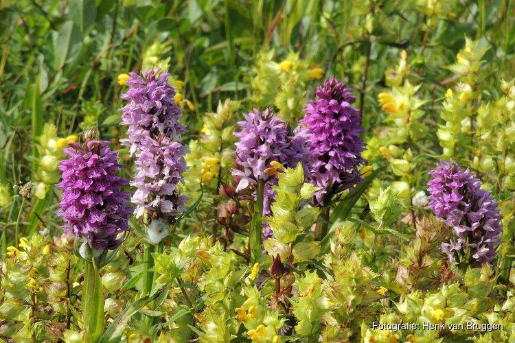 Zwerftocht op zoek naar de orchidee