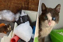 Half blinde kat gered uit afvalcontainer in Schagen