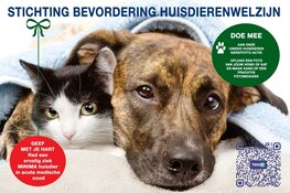 Doe mee aan de foto mozaïek kerstactie voor acute hulp ernstig zieke minima huisdieren