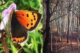 #mijnnatuurblijft: ook Noord-Holland strijdt online voor behoud natuurschoon