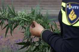 Hennepkwekerij met honderden plantjes gevonden in huis en loods in Oudesluis