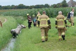 Paard te water in Schagen