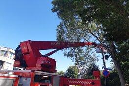 Kat springt zelf uit boom na komst hoogwerker