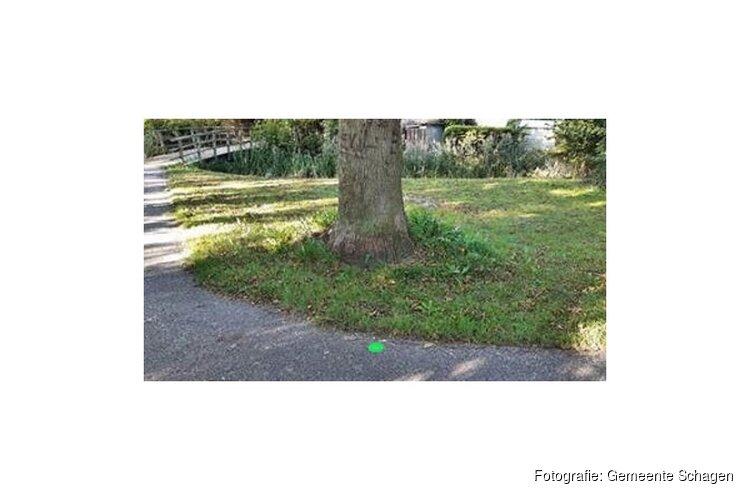 Mysterieuze groene stippen gespot op bomen in Schagen. Wat is er aan de hand?
