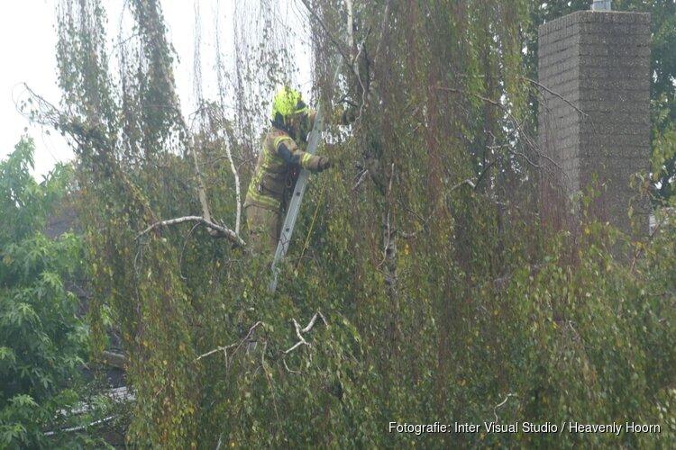 Vogel vast in boom in Schagen