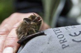 Vleermuizen spotten in Eendenkooi 't Zand