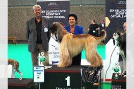 Rhett uit Zijdewind wereldkampioen tijdens grote hondenshow in de RAI
