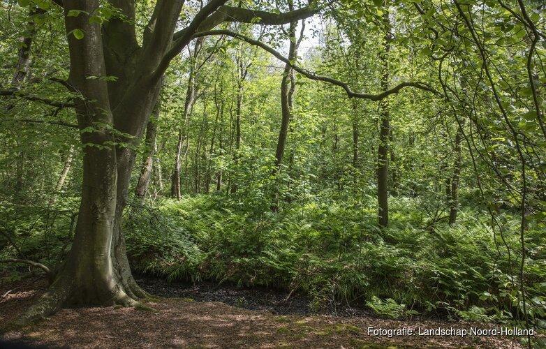Bos Wildrijk biedt ruimte voor herdenking