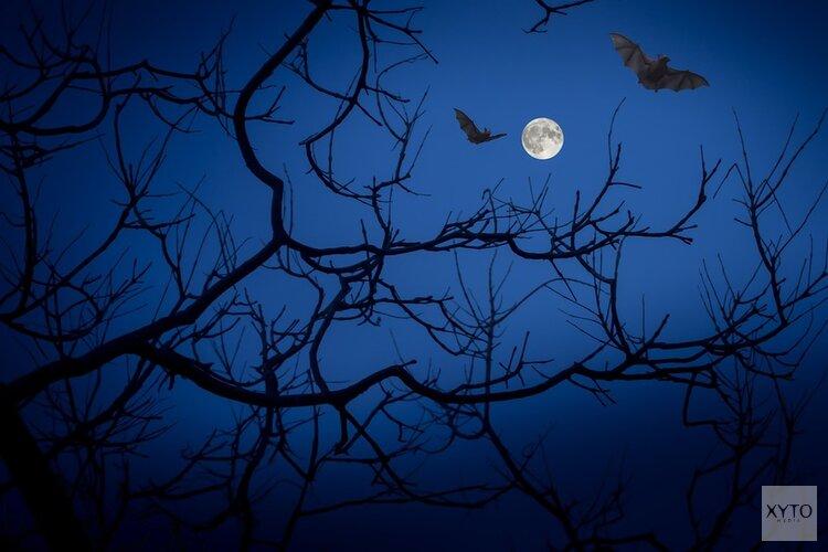 Schagen organiseert eerste Halloween Weekend: Loop jij mee met de Halloween Parade?