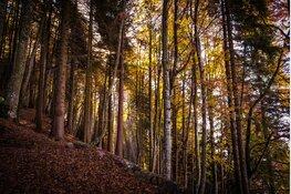 Stichting Gezond Natuur Wandelen biedt gratis wekelijkse natuurwandelingen aan